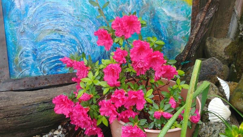 azalea Op Mijn Terras royalty-vrije stock afbeelding