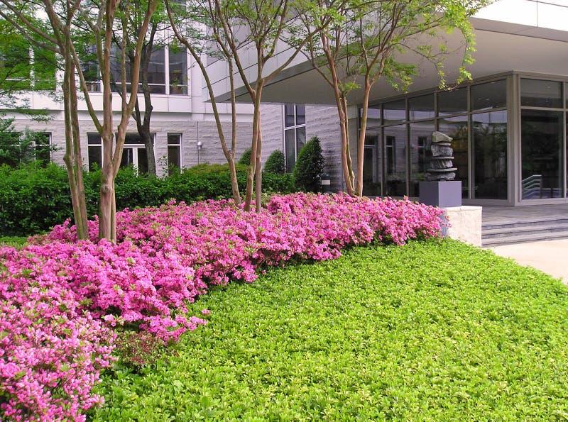 Azaleas en el edificio de oficinas foto de archivo libre de regalías