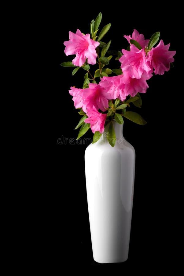 Azaleas rosadas en un florero blanco fotos de archivo libres de regalías