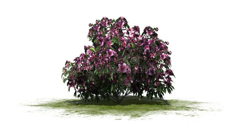 Azaleenbusch mit rosa Blüten stock abbildung