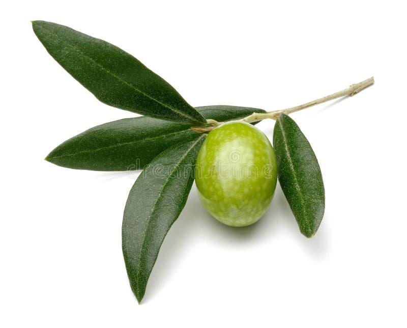 Azeitona verde e folhas no fundo branco fotografia de stock royalty free