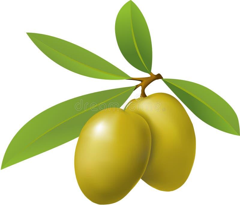 Download Azeitonas ilustração do vetor. Ilustração de planta, greece - 10063049