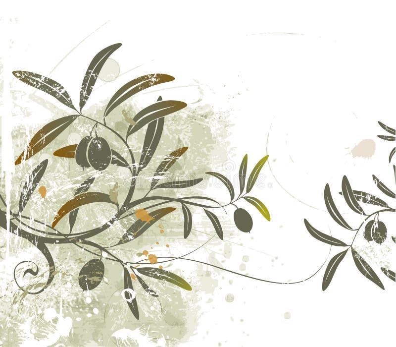 Download Azeitonas ilustração stock. Ilustração de forma, botanical - 1241732