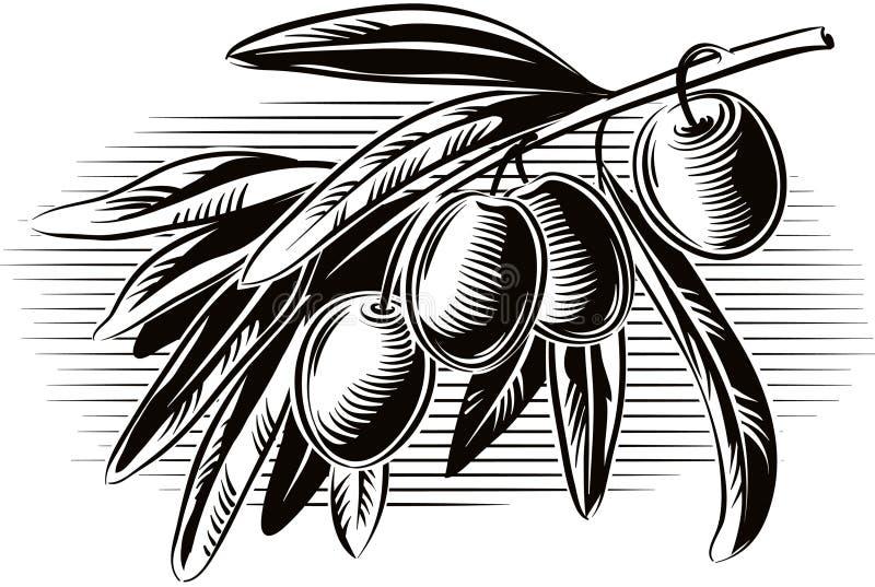 Azeitonas em um ramo de oliveira pequeno ilustração royalty free