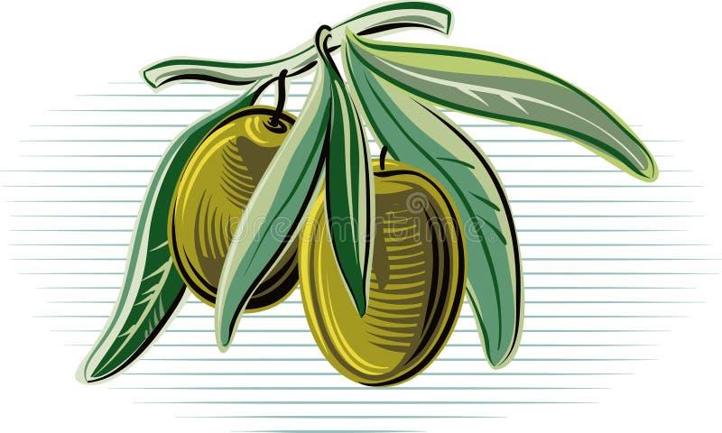 Azeitonas em um ramo de oliveira pequeno ilustração stock