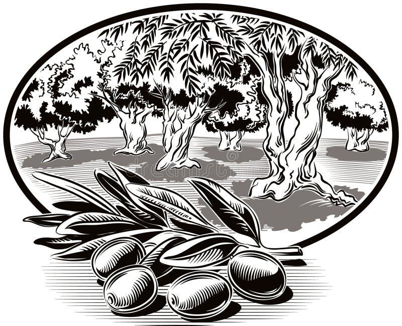 Azeitonas em uma filial ilustração stock