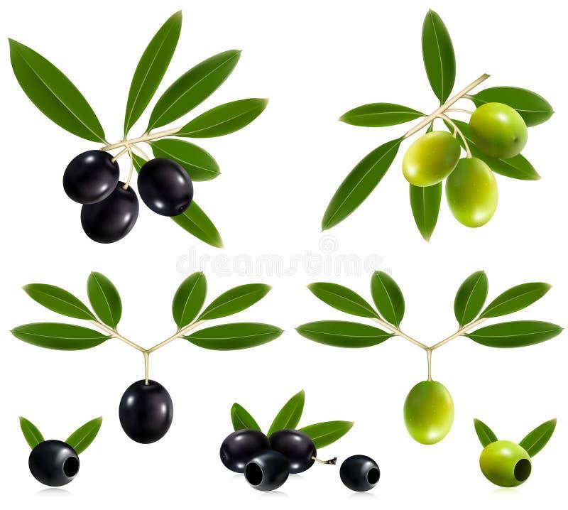 Azeitonas verdes e pretas com folhas. ilustração stock