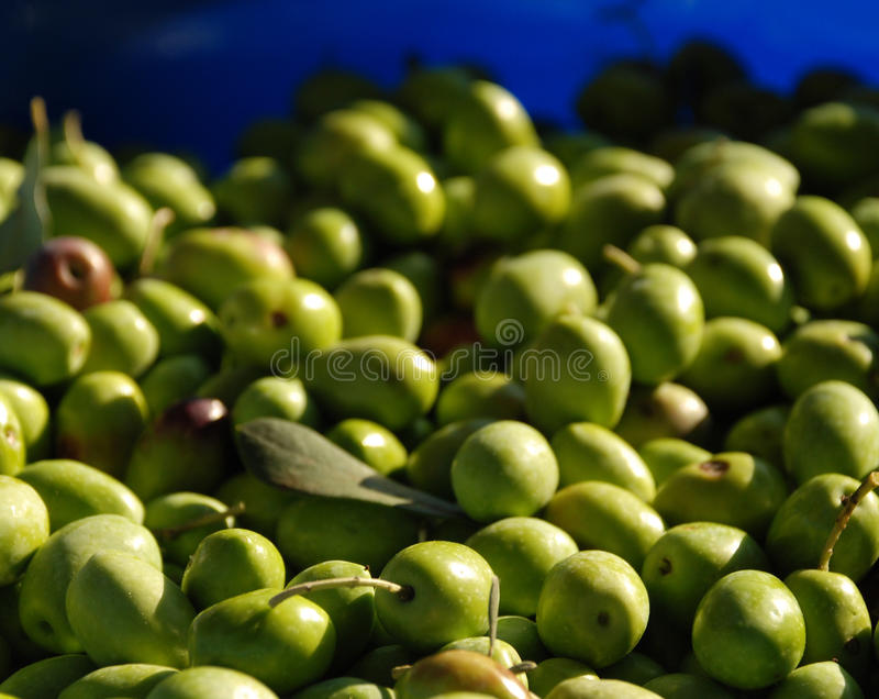 Azeitonas verdes na luz natural fotografia de stock royalty free