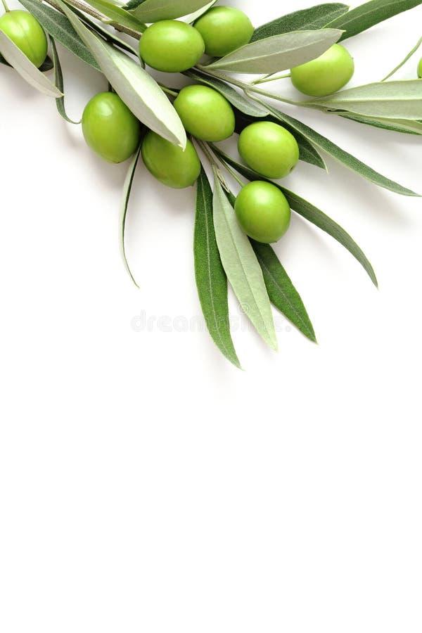 Azeitonas verdes no branco imagem de stock