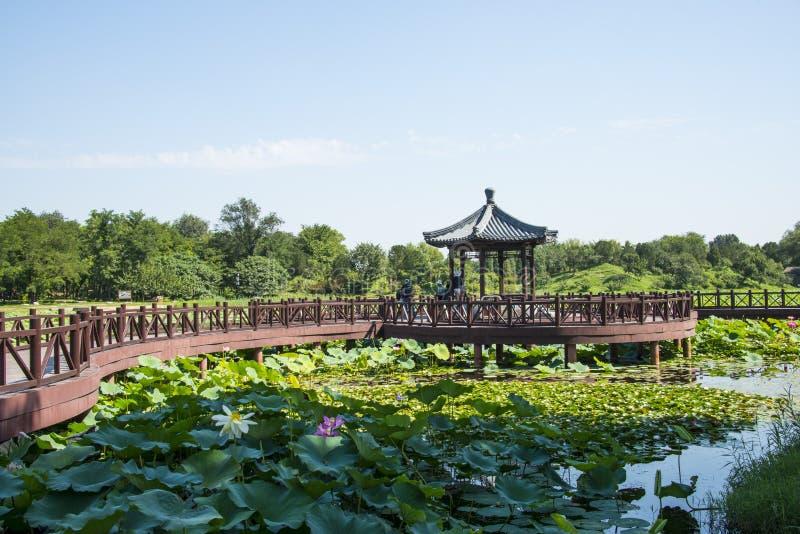Azië China, Peking, Oud de Zomerpaleis, lotusbloemvijver, houten brug, Houten paviljoen royalty-vrije stock afbeelding