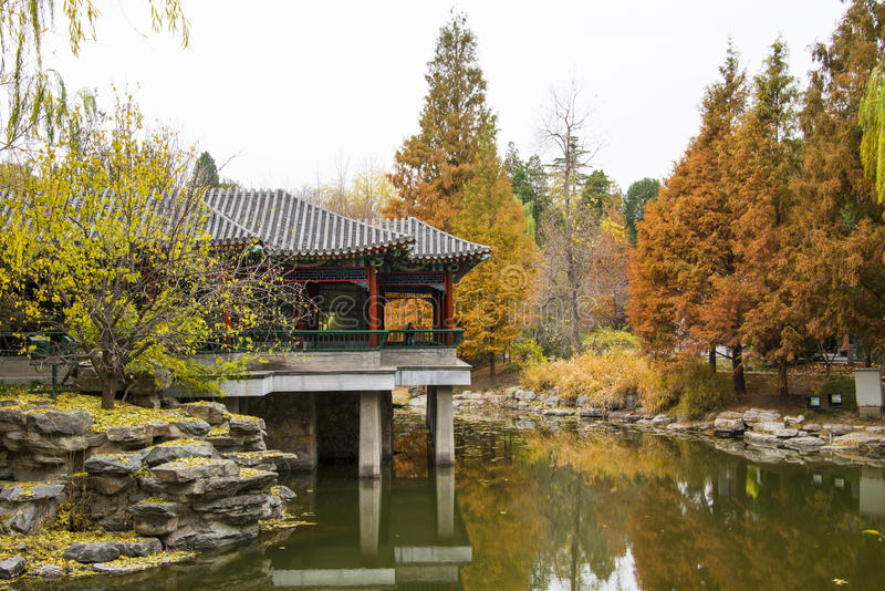 Azië China, Peking, Zhongshan-Park, de herfstlandschap royalty-vrije stock foto