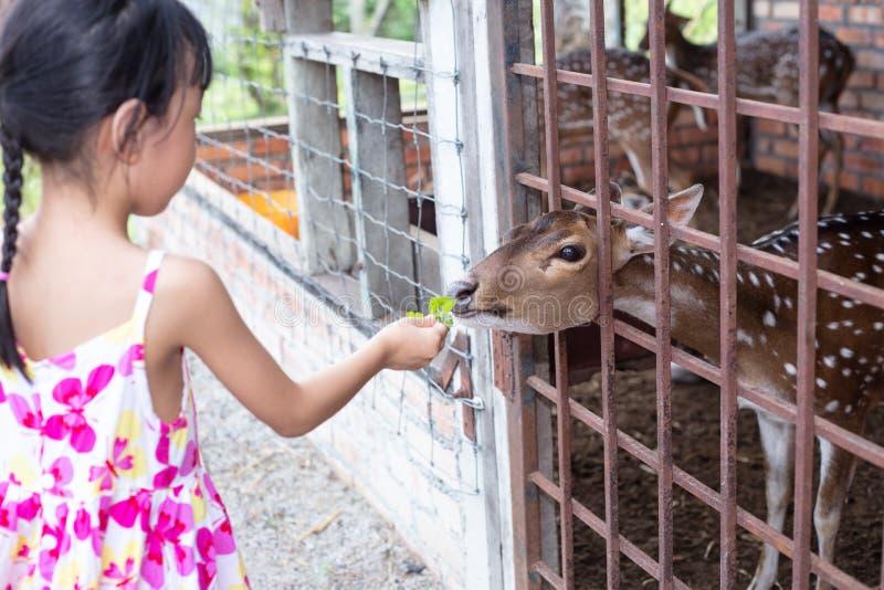 Aziaat Weinig Chinees Meisje die een hert voeden royalty-vrije stock afbeelding