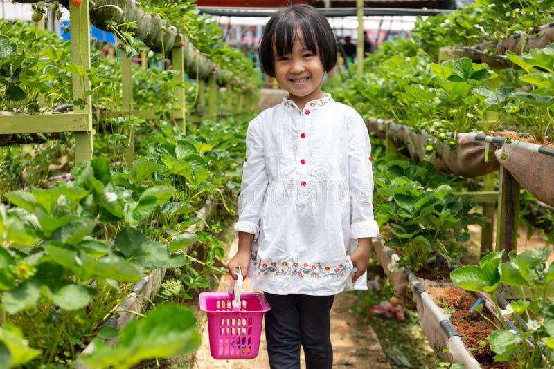 Aziaat Weinig Chinees Meisje die verse aardbei plukken stock foto's