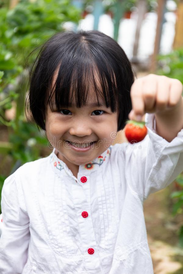 Aziaat Weinig Chinees Meisje die verse aardbei plukken royalty-vrije stock foto's