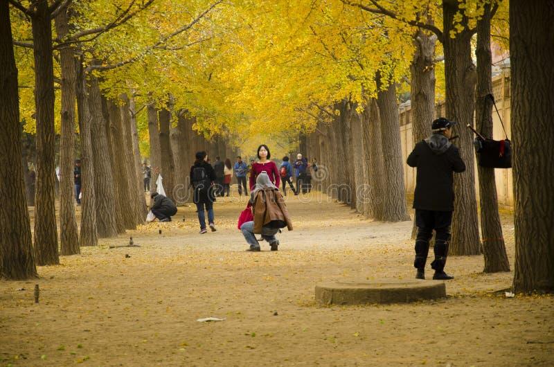 Aziatisch China, Peking, de Weg van het ginkgolandschap royalty-vrije stock foto's