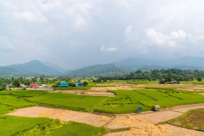 Aziatisch padieveld na oogst in Nan-provincie, Thailand stock afbeelding