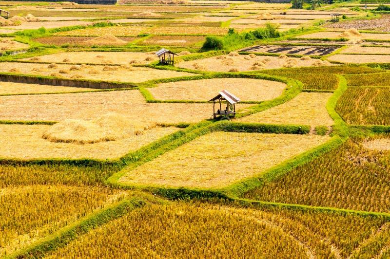 Aziatisch padieveld na oogst in Nan-provincie, Thailand royalty-vrije stock foto