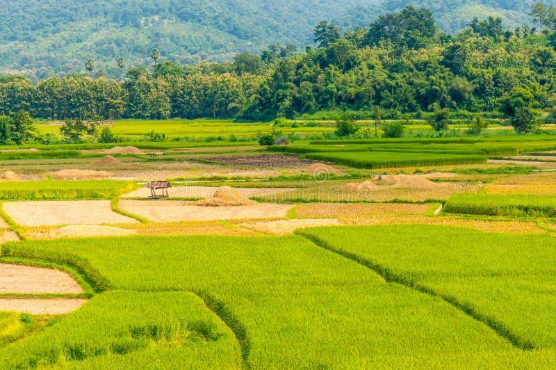 Aziatisch padieveld na oogst in Nan-provincie, Thailand royalty-vrije stock afbeelding