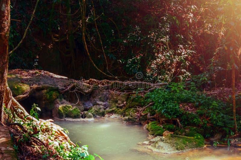 Aziatisch tropisch regenwoud met wildernisrivier Donker magisch bos met zonneschijn Het concept van de aard royalty-vrije stock foto's