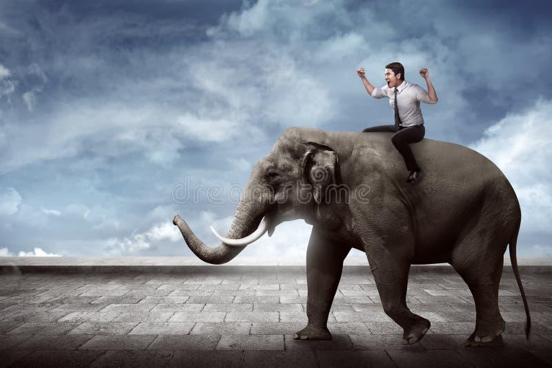 Aziatische bedrijfspersonenvervoerolifant royalty-vrije stock foto's