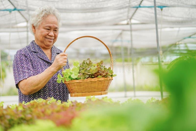 Aziatische hogere dame die groen en rood eiken plantaardig van de de cultuurboom van de salade hygiënisch organisch installatie h royalty-vrije stock fotografie