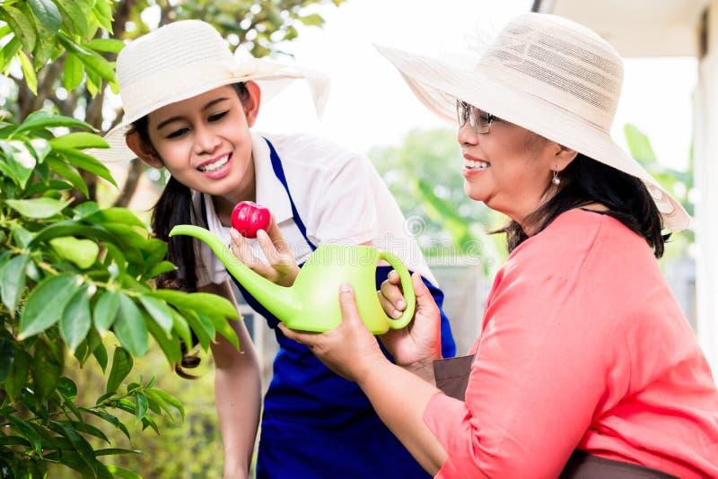 Aziatische hogere vrouw die terwijl het tuinieren samen met haar dau glimlachen stock foto