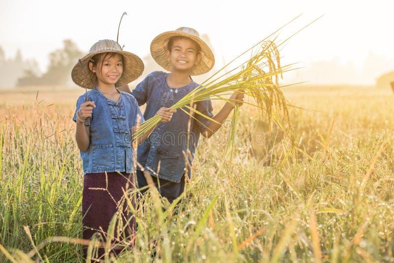 Aziatische kinderenlandbouwer op geel padieveld stock afbeelding