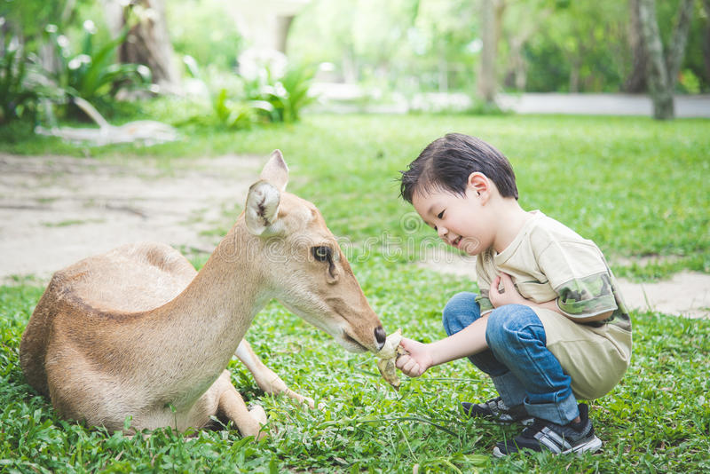 Aziatische kindervoedingsherten stock foto