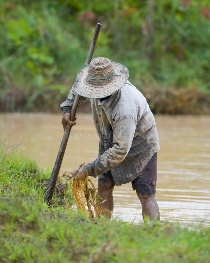 Aziatische landbouwer die de grond voorbereidt royalty-vrije stock foto