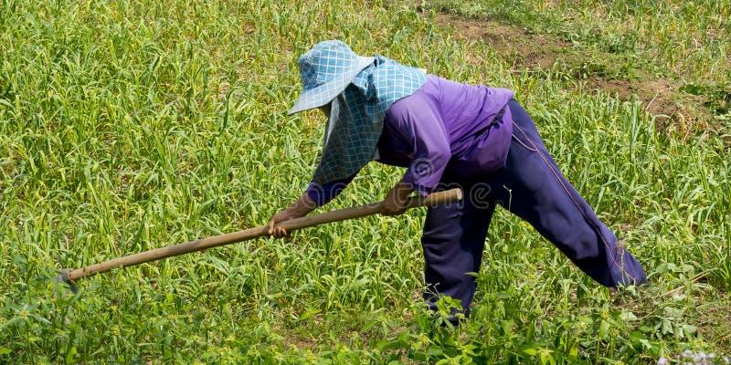 Aziatische landbouwer op een gebied royalty-vrije stock afbeelding