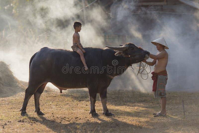 Aziatische lokale jongenszitting op buffels met vader, platteland Thailand royalty-vrije stock afbeelding