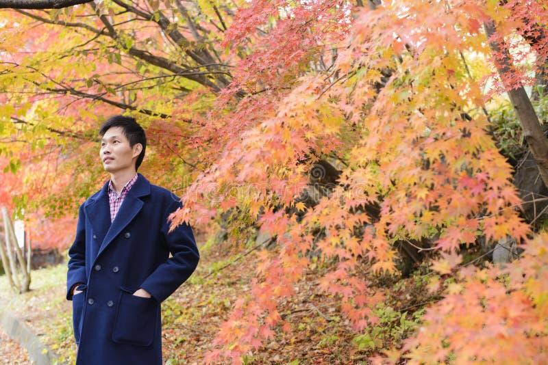 Aziatische mens met esdoornbladeren in de herfst royalty-vrije stock fotografie