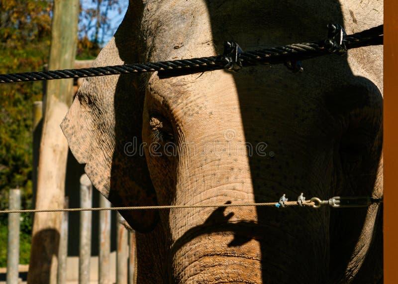 Aziatische olifant achter een veiligheidsomheining royalty-vrije stock fotografie