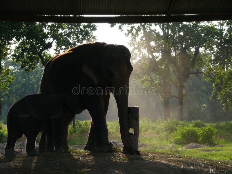 Aziatische Olifant en Babe in Gevangenschap stock afbeelding
