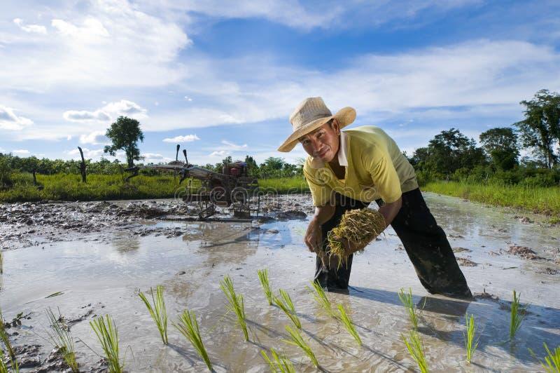 Aziatische rijstlandbouwer stock foto's