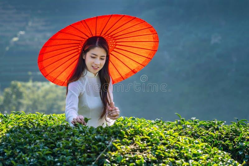 Aziatische vrouw die de cultuur van Vietnam traditioneel op groen theegebied dragen stock afbeelding