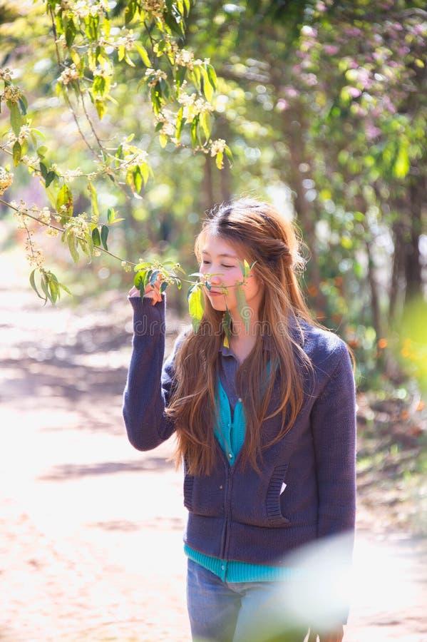 Aziatische vrouw met de bloesem van Himalayan Cherry Or Cherry stock foto's