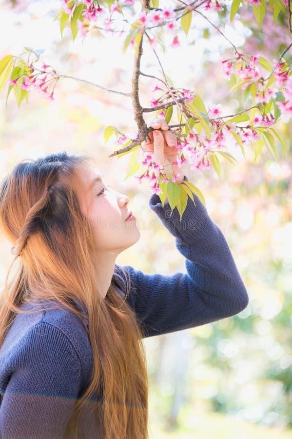 Aziatische vrouw met de bloesem van Himalayan Cherry Or Cherry royalty-vrije stock foto's