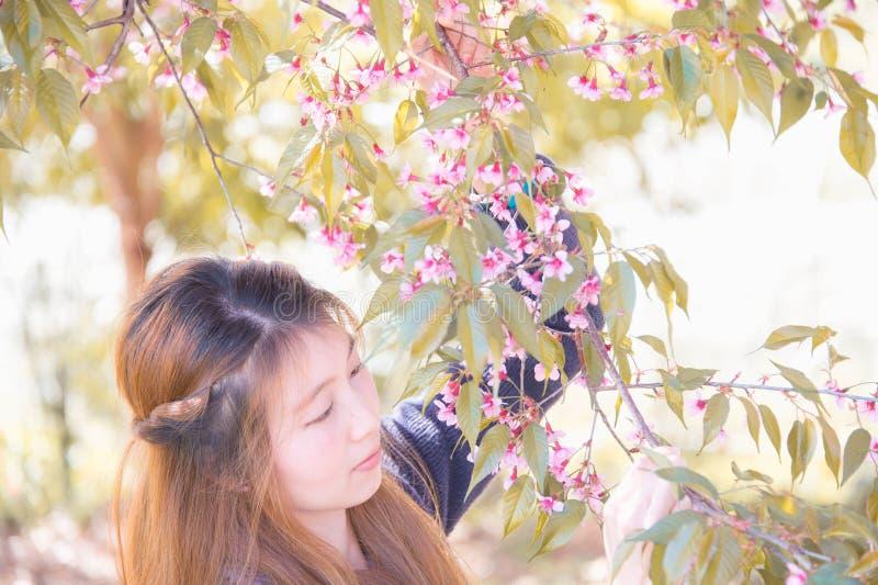 Aziatische vrouw met de bloesem van Himalayan Cherry Or Cherry stock afbeeldingen
