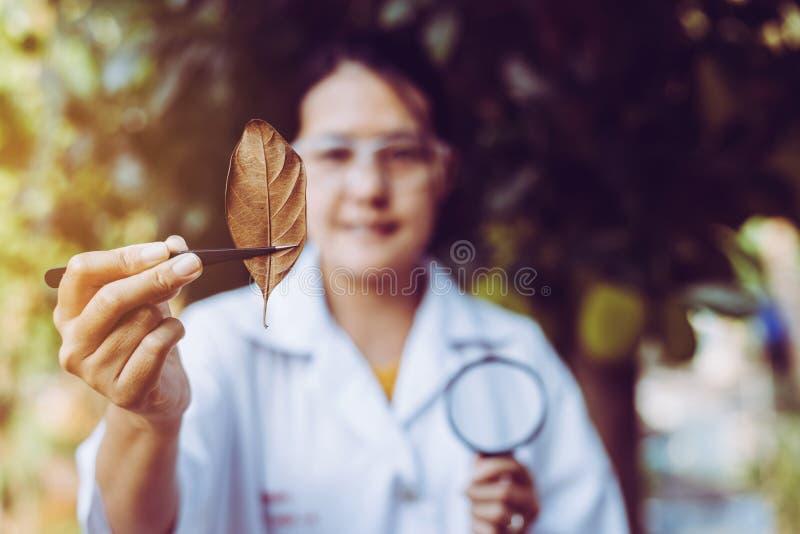 Aziatische vrouwelijke onderzoeker analyseert en onderzoekt blad met het bestuderen van gegevens in de tuin stock afbeelding