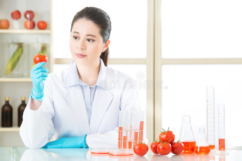 Aziatische vrouwelijke wetenschapper die tomaat voor genetische modificatie r kijken stock foto's