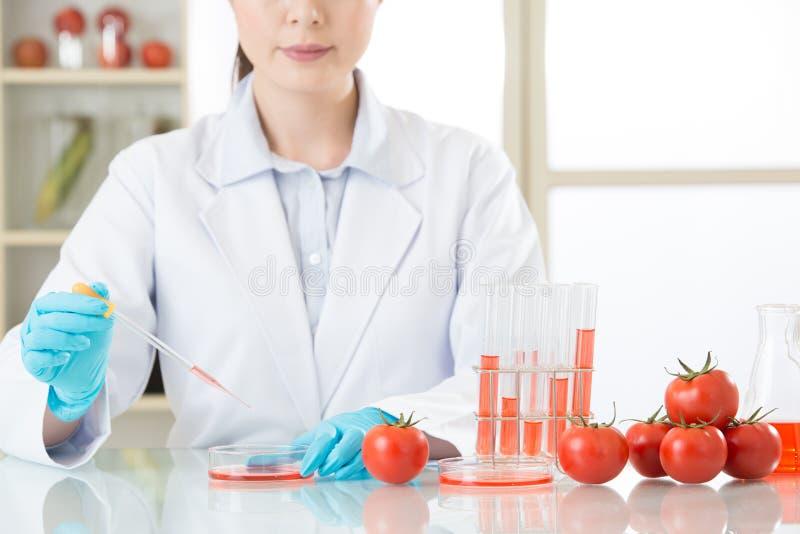 Aziatische vrouwelijke wetenschapper die tomatengenetische modificatie doen researc royalty-vrije stock foto