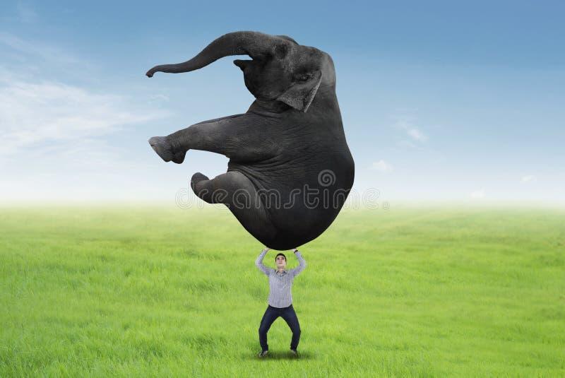 Aziatische zakenman die een olifant opheffen stock fotografie