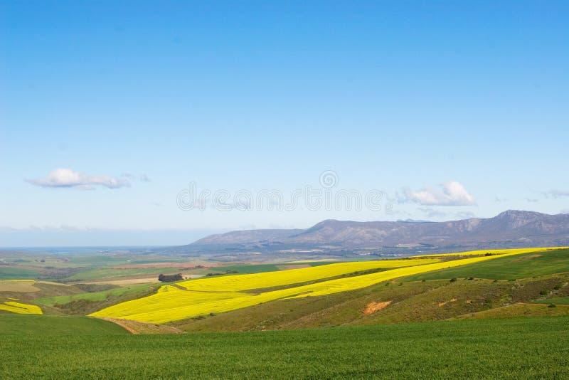 Azienda agricola #7 immagine stock