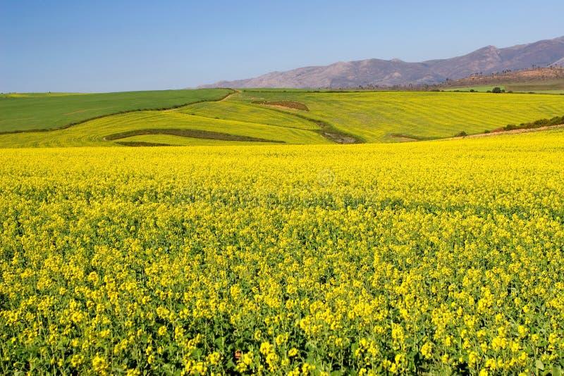 Azienda agricola #8 fotografia stock