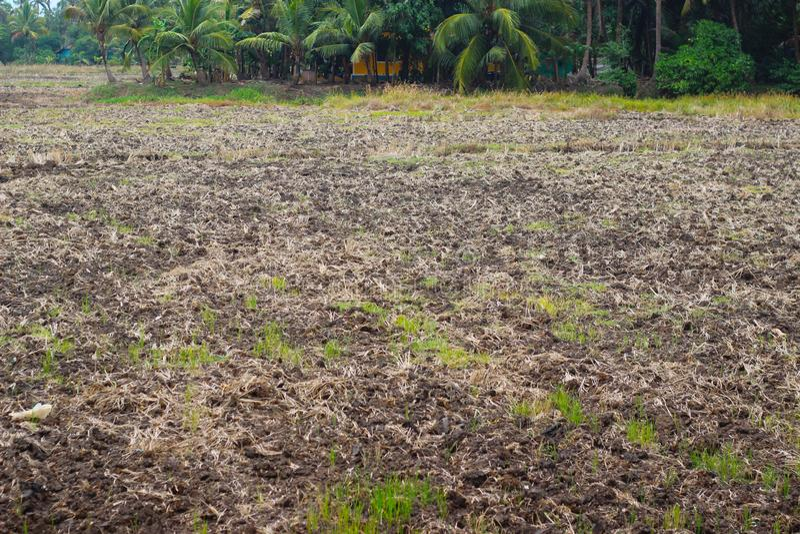 Azienda agricola asciutta dopo l'inondazione massiccia fotografia stock libera da diritti