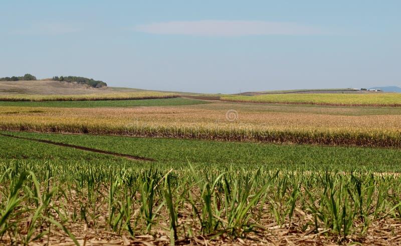 Azienda agricola australiana della canna da zucchero di industria saccarifera immagini stock libere da diritti