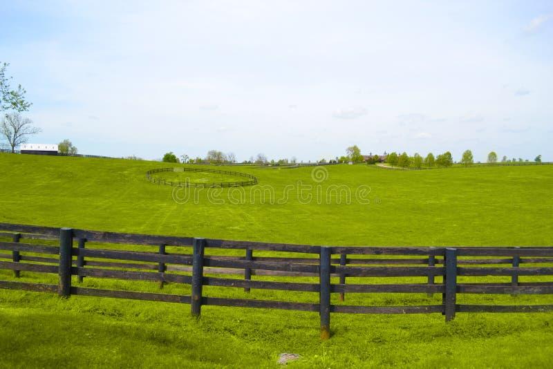 Azienda agricola del cavallo del Kentucky fotografia stock libera da diritti