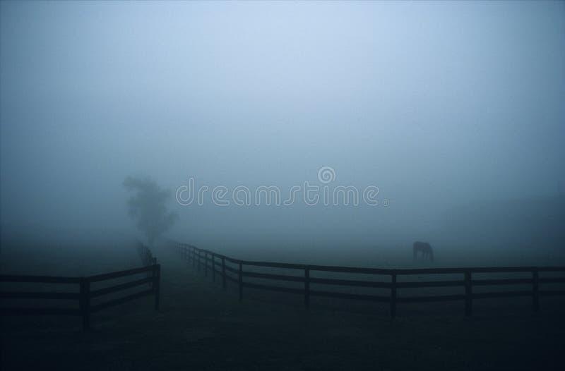 Azienda agricola del cavallo in nebbia immagini stock libere da diritti