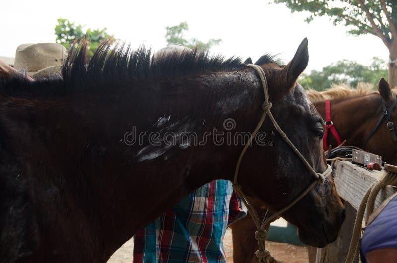 Azienda agricola del cowboy del cavallo immagine stock